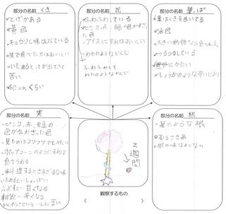 杉浦伶奈 「ピレクの紹介2」.jpg